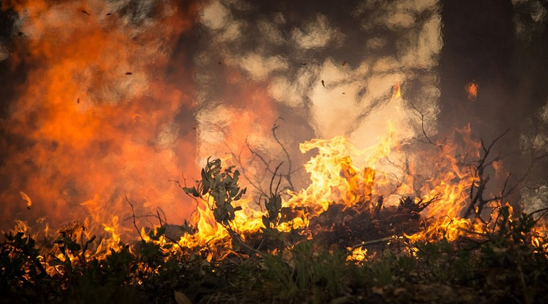 Nine civilians charred to death in Kurangani forest fire.Forest Fire Representation