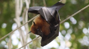 Is Nipah Virus Developing As Epidemic Disease