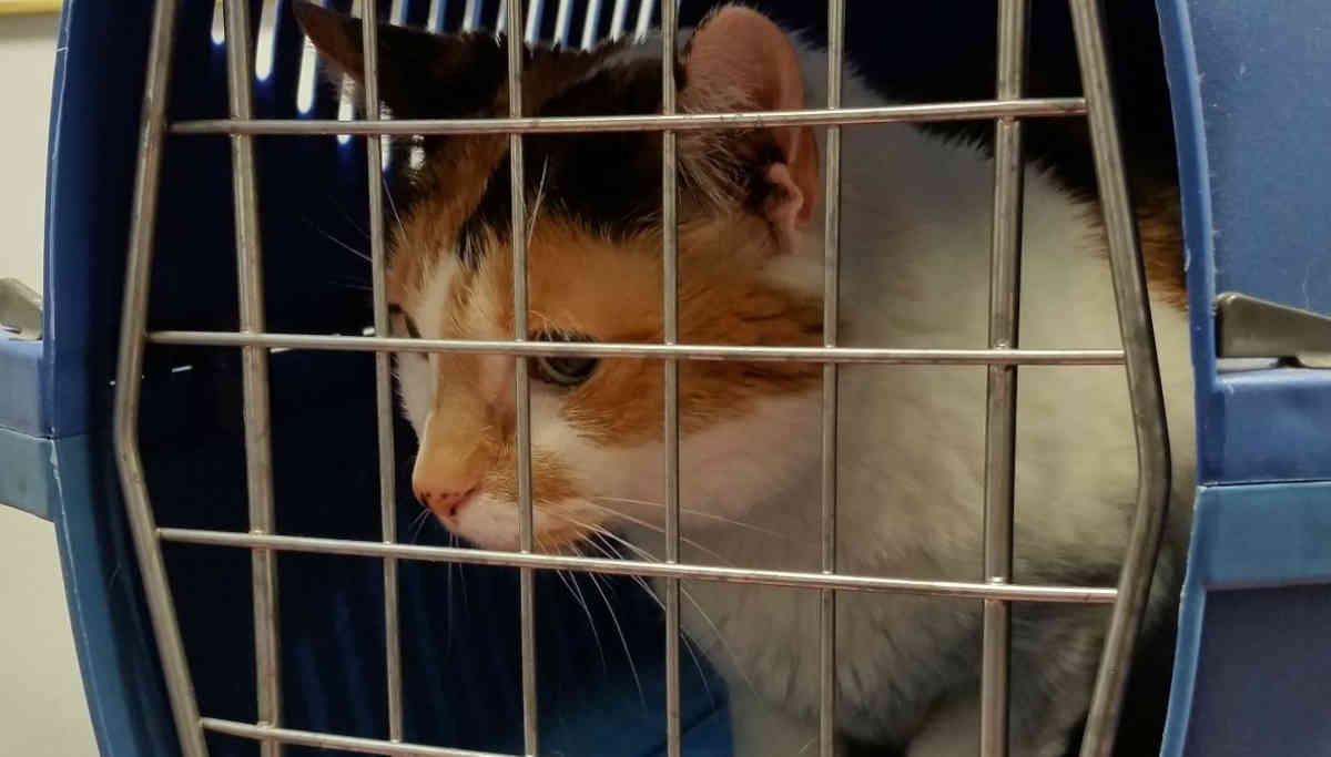 Cat in a cage / Representation